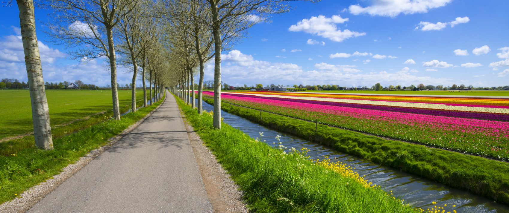 Flowerfields and countryside